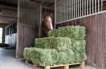 heuwerbung, equus arena, natürliches heu