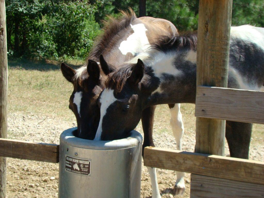 Nelson-Tränke für den Offenstall von Texas Trading - Pferdebetrieb