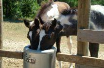 texas trading, pferdetränke, Pferdeversorgung
