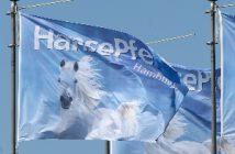 sonderschau pferdebetriebe, hansepferd, moderne pferdehaltung
