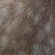 Fachsymposium über Pferde-Haut und -Huf