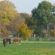 Drei von vier Pferdeweiden zeigen Kalkmangel