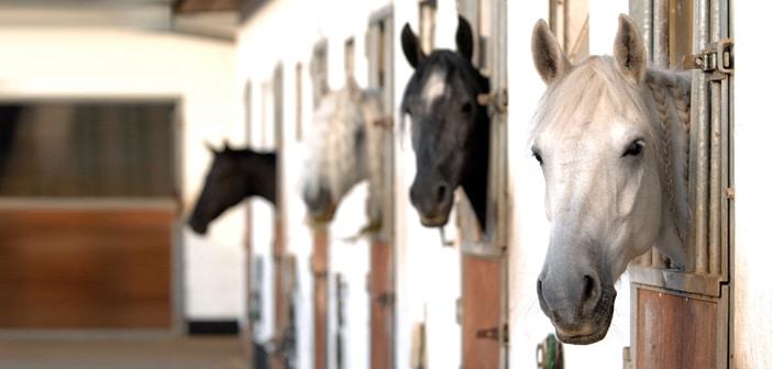 Diebstahl im Pferdestall