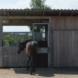 Pferdebetrieb Praxistag: Wissen und Erfahrungen vor Ort