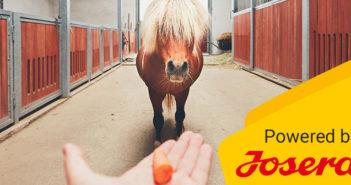 Pferdefuetterung-Rationsberechung