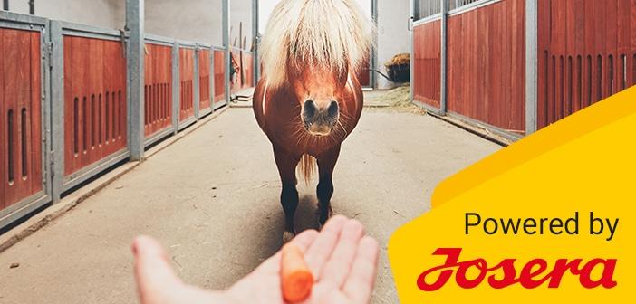 Pferdefütterung – Eine Frage für sich