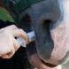 Entwurmung bei Pferden: Checkliste für das Jahr