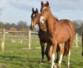 Weiderisiko: Haftungsfragen bei der Weidehaltung von Pferden