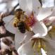 Artenvielfalt: Reitanlagen ökologisch aufwerten