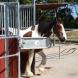 Hit-Aktivstall: Pferdgerechte und arbeitssparende Gruppenhaltung