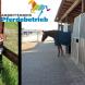 Arbeitskreis Pferdebetrieb: Betriebsführung, Workshops und Austausch