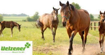 Risiko Dürre: Giftige Gefahr auf der Pferdeweide