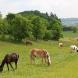 Tierquäler vergeht sich an Stute bei Regensburg