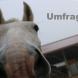 Umfrage: Trainingsgeräte für Pferde