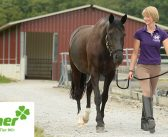 Helfende Hände: Finanzielles Risiko für Pferdebetriebe