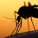 Pferd mit West-Nil-Virus infiziert