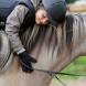 Reitschulponys bei ehorses