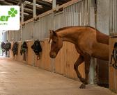 Unfall im Reitstall: Tierhüter in der Pflicht