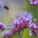 Per Mausklick die Biodiversität stärken