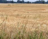 Grünland: Steht noch ein Dürrejahr bevor?