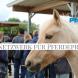 Arbeitskreis Pferdebetrieb – Austausch und Fachwissen