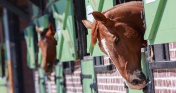Tür und Tor sind für Pferde kein Hindernis