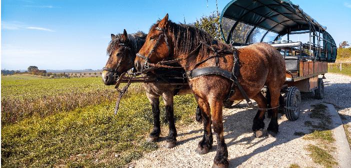 RAL-Gütezeichen für Pferdehaltung und Pferdenutzung