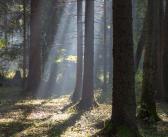 Wälder von Klimawandel bedroht