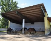 Modernisierung und Umbauten in Stall und Halle