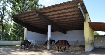 Auf dem Familienbetrieb Müller in Kissing wich die Milchviehhaltung einem Pensionspferdestall mit Bullenmast. Einsteller haben die Wahl zwischen Offenstall und Boxenhaltung. Foto: Pferdebetrieb