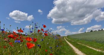 Forschungsprojekt: Blühstreifen für Grünland