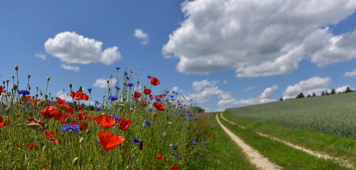 Blühstreifen für Grünland fördert Artenschutz