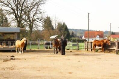 Offenstall und Herdenhaltung mit Pferden.