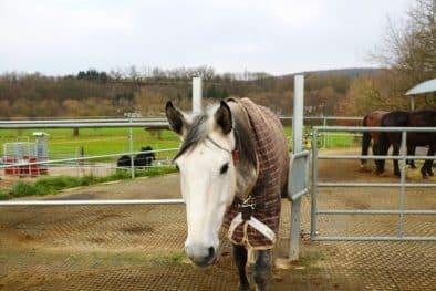 Selektionstor für Pferde in einem Offenstall.