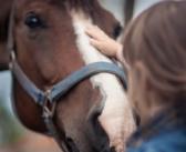 Studie zeigt: Pferde erkennen Gesichter