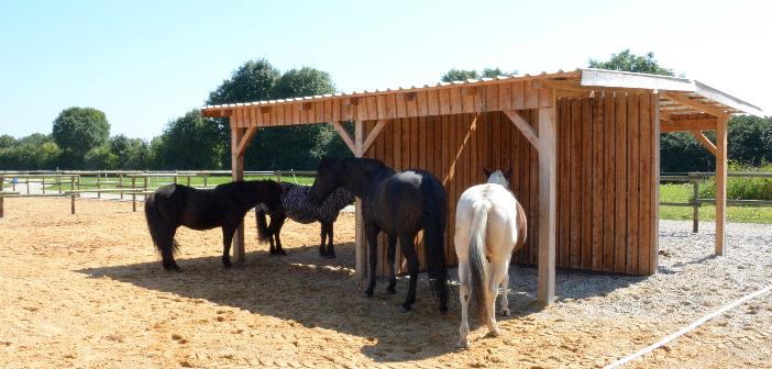 Schutz für Pferde: Weidehütten, Sonnensegel und Weidezelte