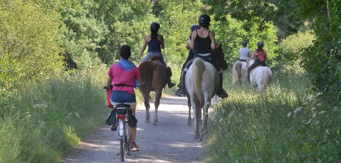 Radfahrer überholt Reiter