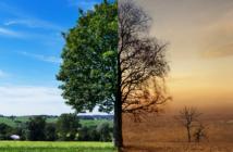 Waldwirtschaft Schäden durch Trockenheit