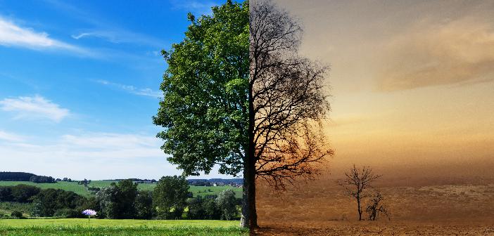 Waldwirtschaft: 700 Millionen Euro Konjunkturpaket