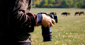 Pferde fotografieren ist eine echte Herausforderung. Foto: sasun-Bughdaryan/adobe.stock.com