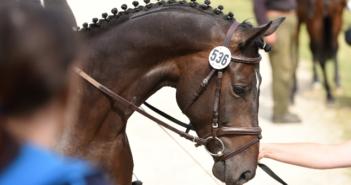 Equine Infektiöse Anämie