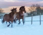 Elektrische Weidezäune im Winter: Check-Up
