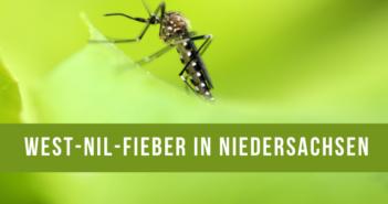 West-Nil-Fieber bei Pferd in Niedersachsen