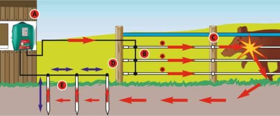 So funktioniert beispielsweise ein Wildabwehrzaun gegen Schwarzwild von AKO.