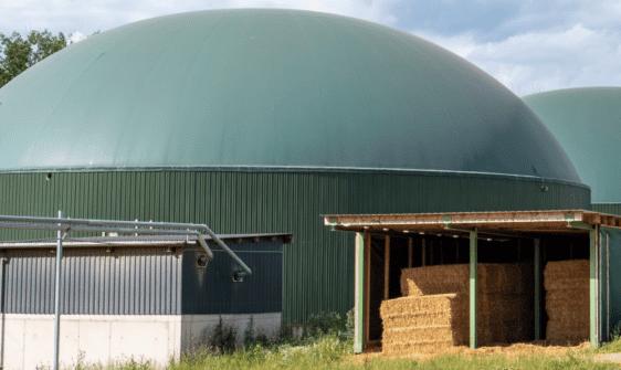 Pferdemist für Biogasanlage