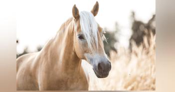 Fahndung Schmuckbild Säure Pferd