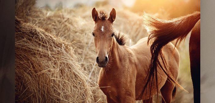 Vom Fohlen zu gesunden Pferd. Die richtige Haltung und Fütterung sind dabei entscheidend.