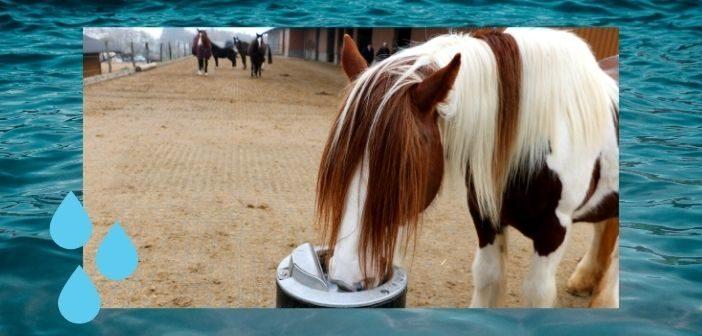 Wasser mit Geschmack um Wasseraufnahme von Pferden zu unterstützen