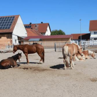 Gruppenhaltung alte Pferde