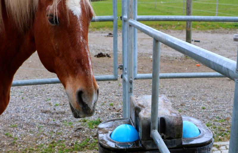 Balltränke Pferd